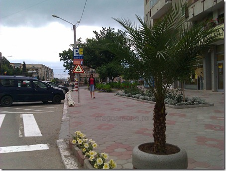 palmier campia turzii   primarie