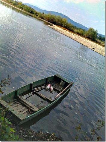 barca pe mures